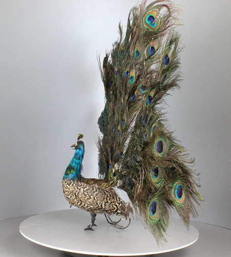 Antique life-size walking and fantail-displaying Peacock automaton, by Roullet & Decamps,